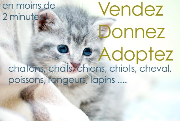 Adopter un chaton gratuit - Un chat gratuit ...