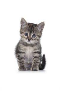 apprivoiser un chaton