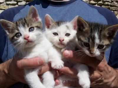 chaton a adopter 78