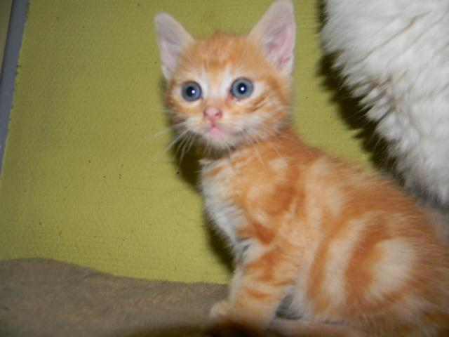 Chaton A Donner 78