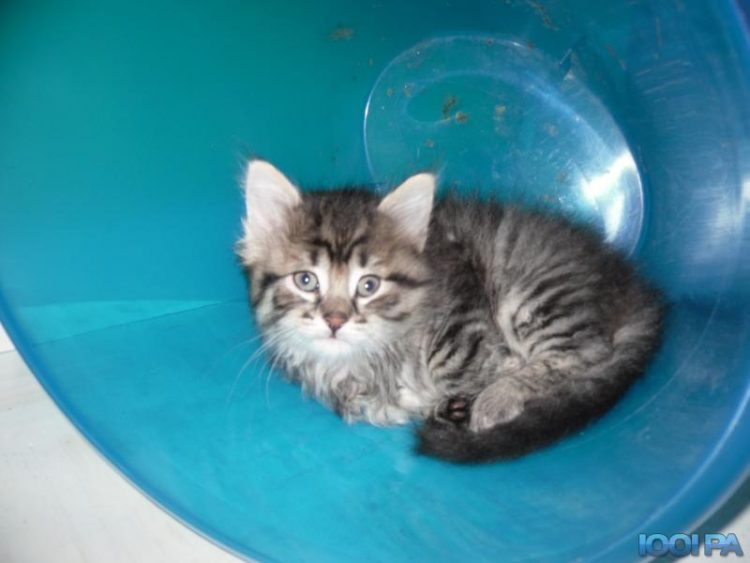 chaton a donner 95