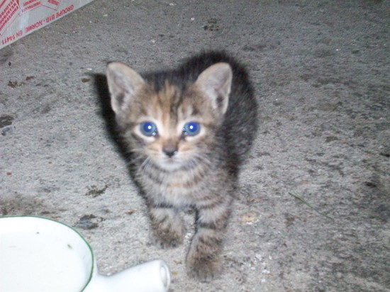 chaton a donner essonne