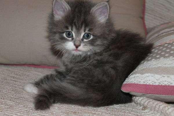 chaton a donner loiret