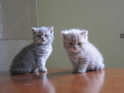 Chaton A Donner Nord