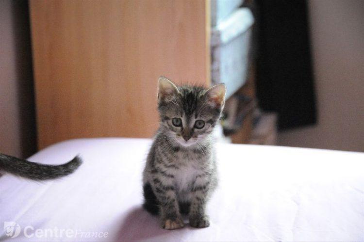 chaton clermont ferrand