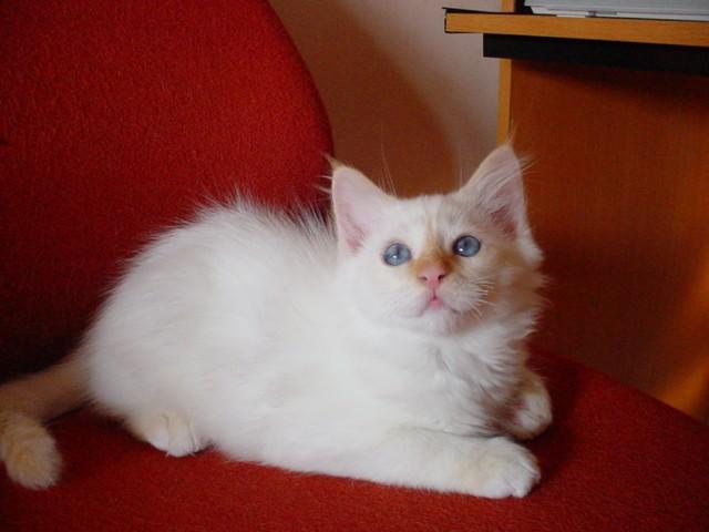 chaton deux mois