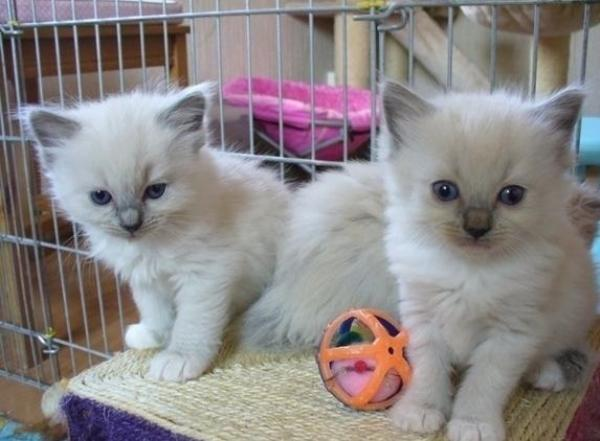 chaton gratuit toulouse