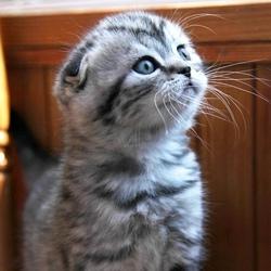 chaton prix