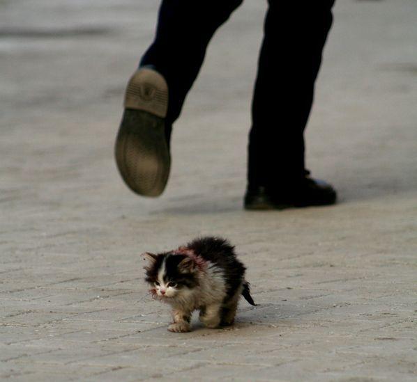chaton trouvé