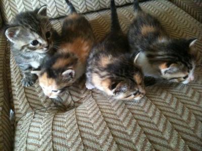 chatons à donner bordeaux
