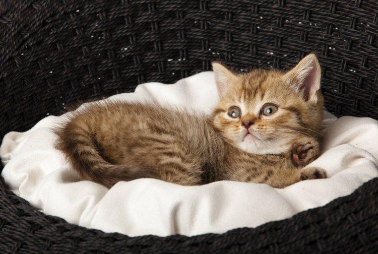 dresser un chaton