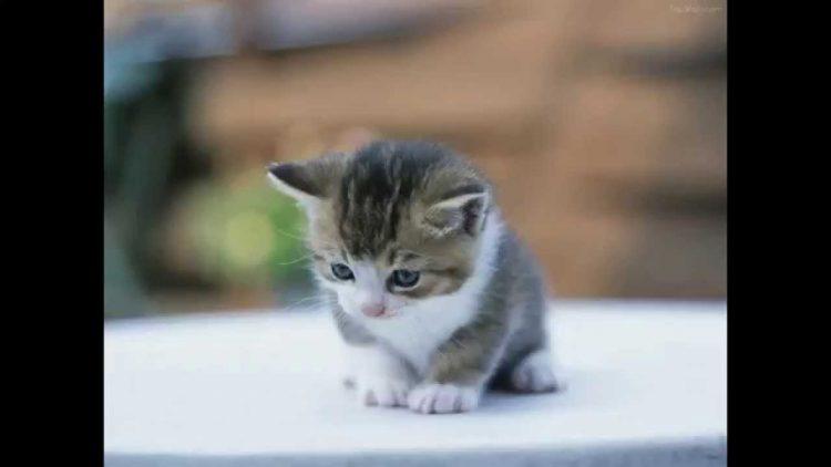 image de petit chaton