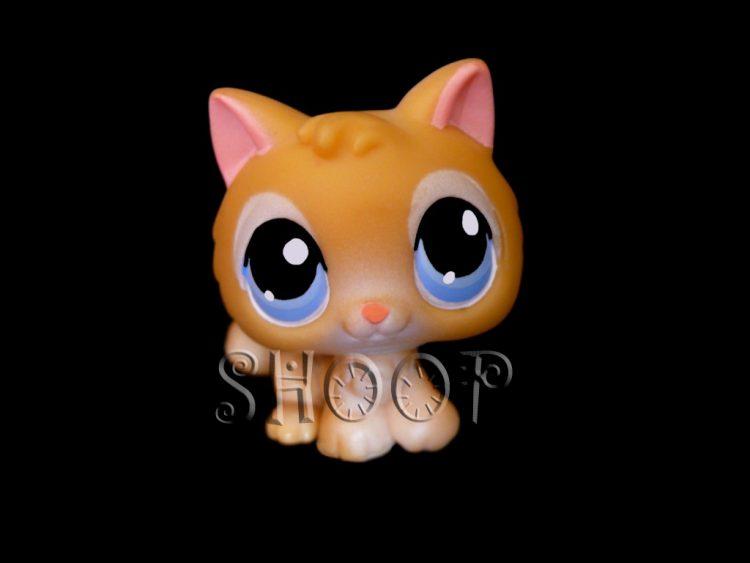 petshop chaton