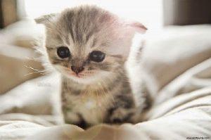 photo chaton trop mignon