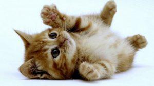 photos de chatons mignons