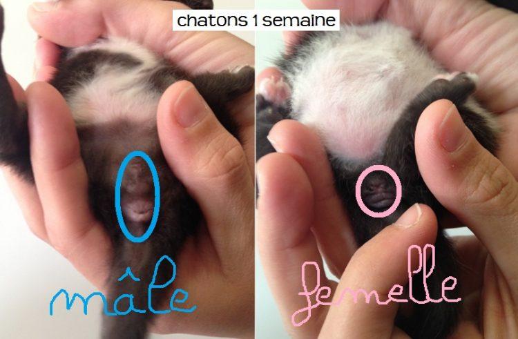 prénom de chaton male