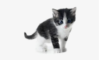 prix d un chaton